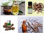 Tác dụng kỳ diệu đến từ tinh dầu đinh hương