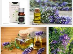 Tinh dầu hương thảo - Tăng cường trí nhớ trong tích tắc