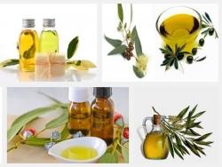 Hé lộ tác dụng tuyệt vời của tinh dầu khuynh diệp