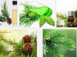 Tác dụng diệu kì của tinh dầu thông đối với sức khỏe và sắc đẹp