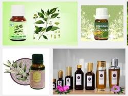 Tinh dầu long não và những công dụng chữa bệnh tuyệt vời