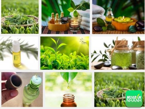 Tinh dầu trà xanh, thần dược của da và tóc