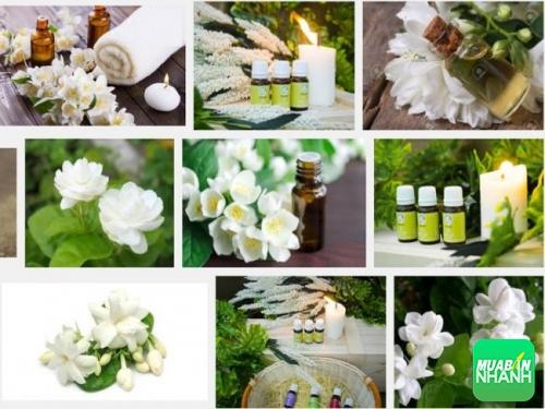 12 công dụng tuyệt vời của tinh dầu hoa lài
